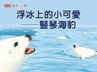 浮冰上的小可愛 [有聲書]:豎琴海豹