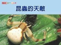 昆蟲的天敵 [有聲書]