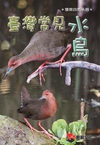 臺灣常見水鳥