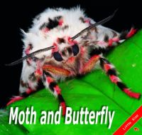 Moth and Butterfly