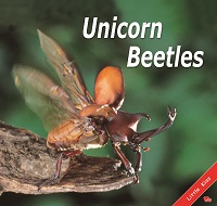 Unicorn Beetles