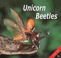 Unicorn Beetles