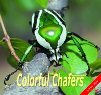 Colorful chafers
